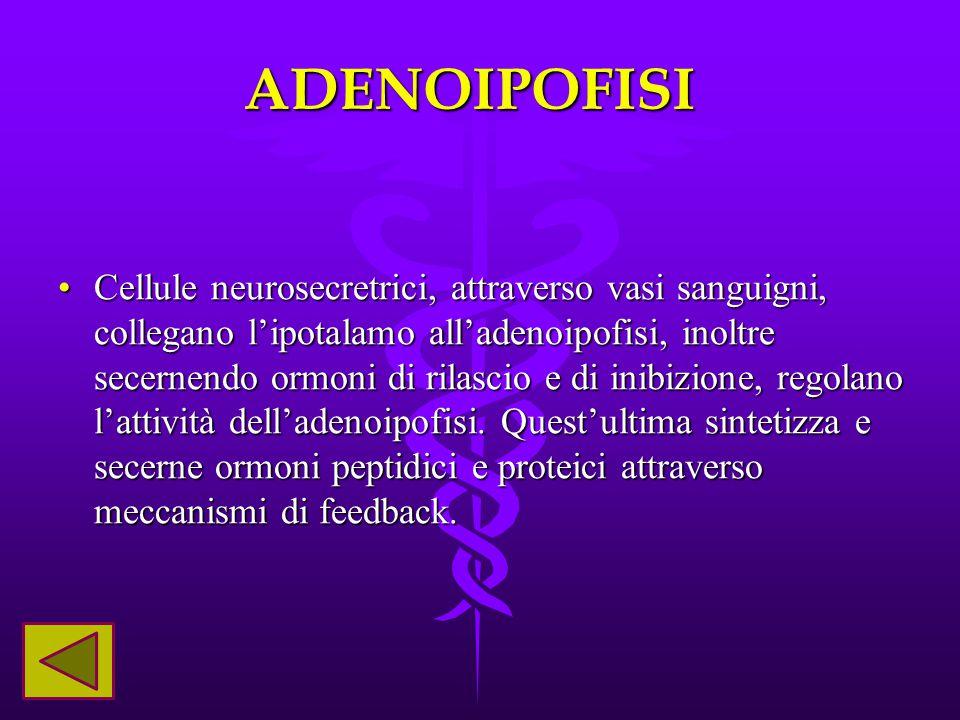 ADENOIPOFISI