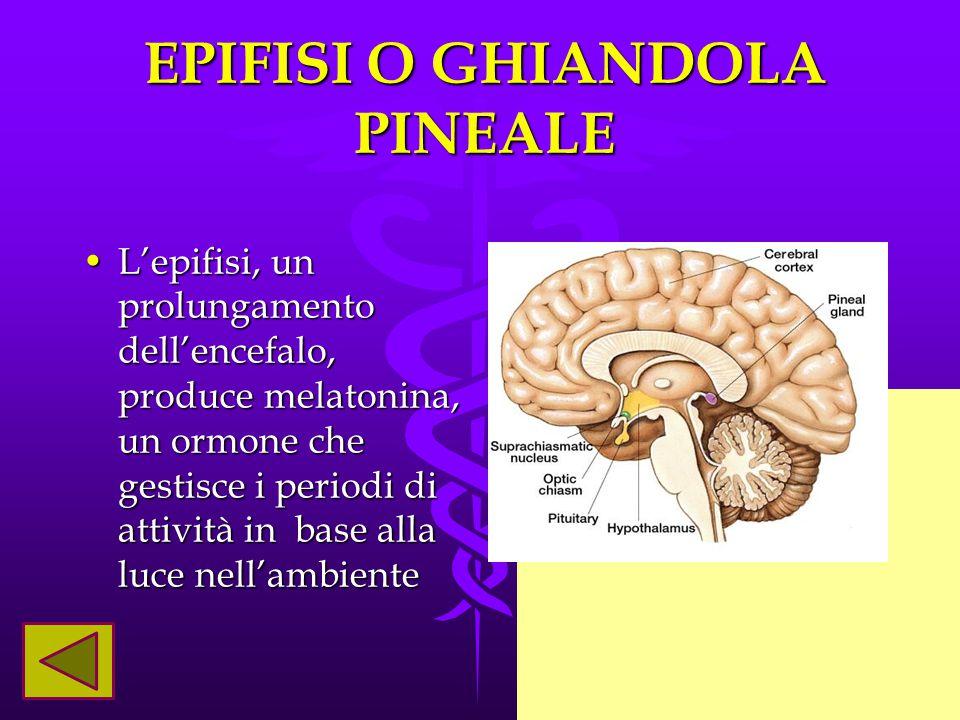 EPIFISI O GHIANDOLA PINEALE