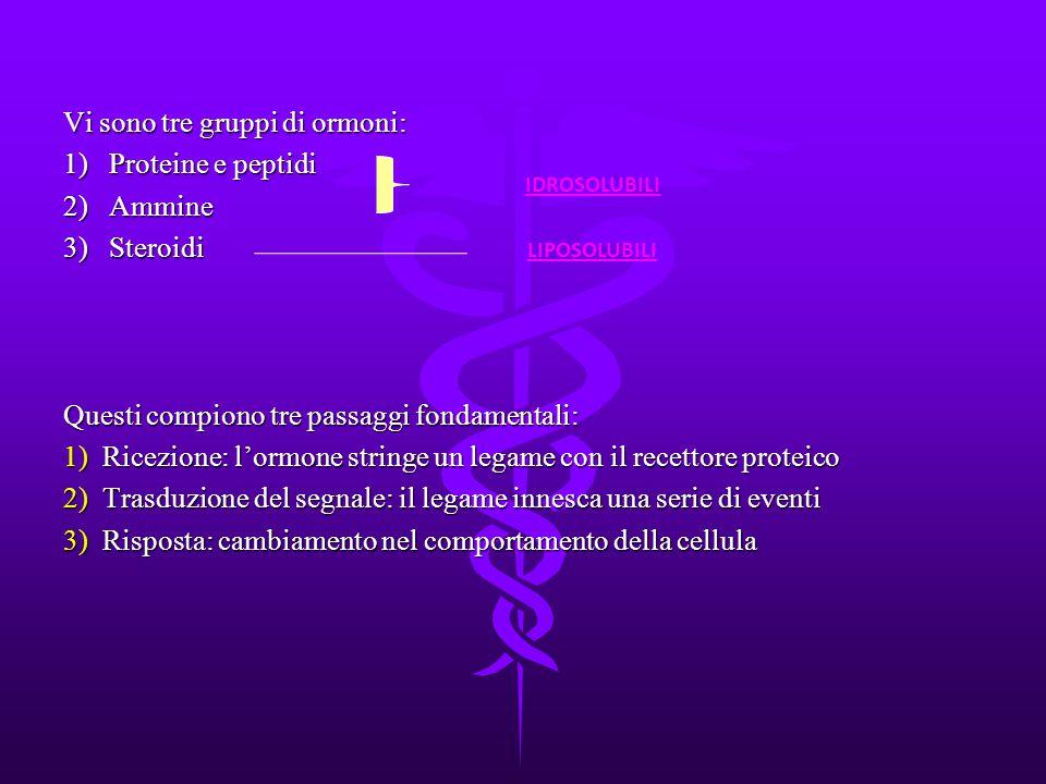 Vi sono tre gruppi di ormoni: 1) Proteine e peptidi 2) Ammine