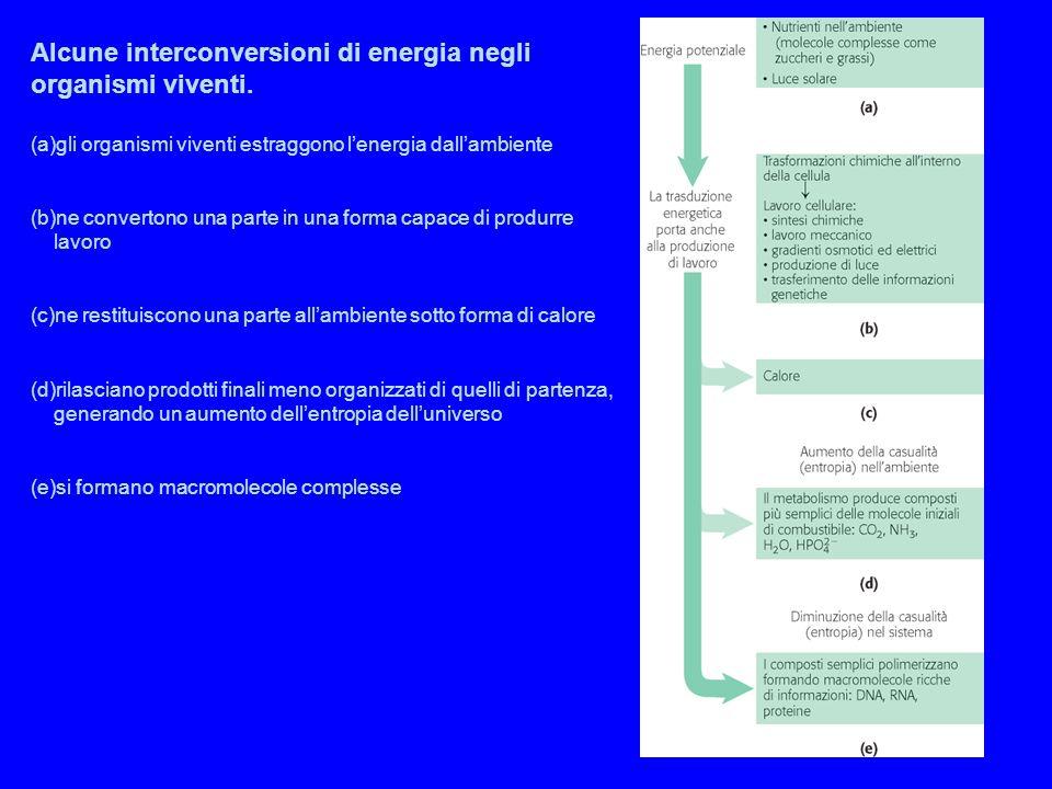 Alcune interconversioni di energia negli organismi viventi.