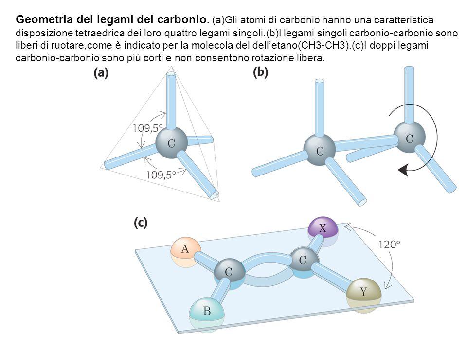 Geometria dei legami del carbonio