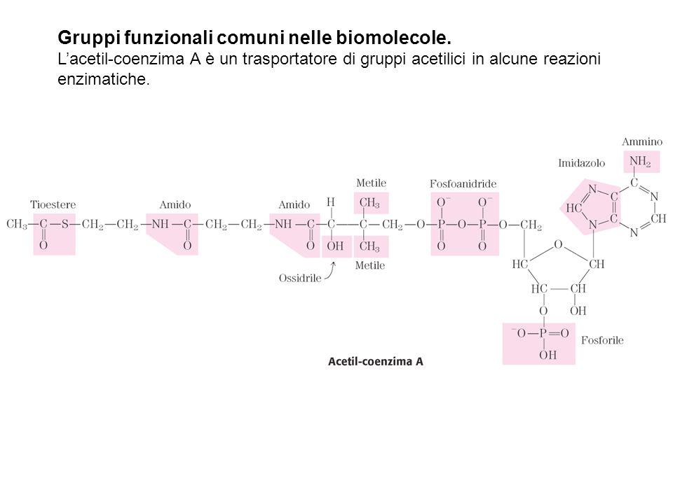 Gruppi funzionali comuni nelle biomolecole.