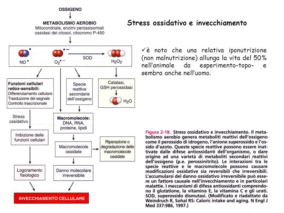 Stress ossidativo e invecchiamento