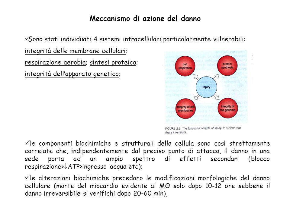 Meccanismo di azione del danno