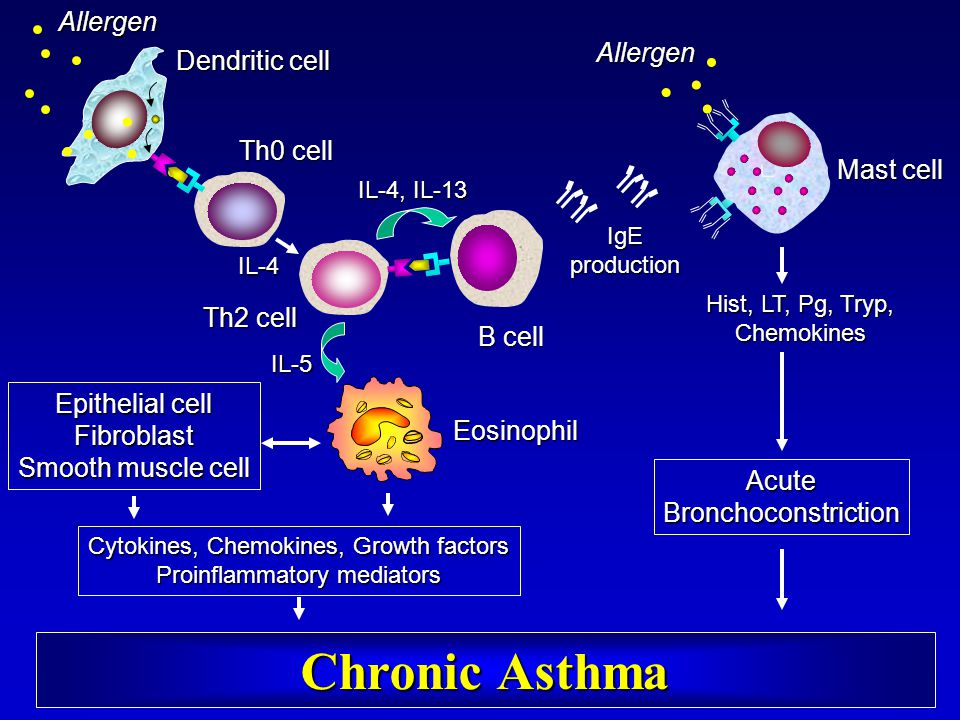 Chronic Asthma Allergen Allergen Dendritic cell Th0 cell Mast cell