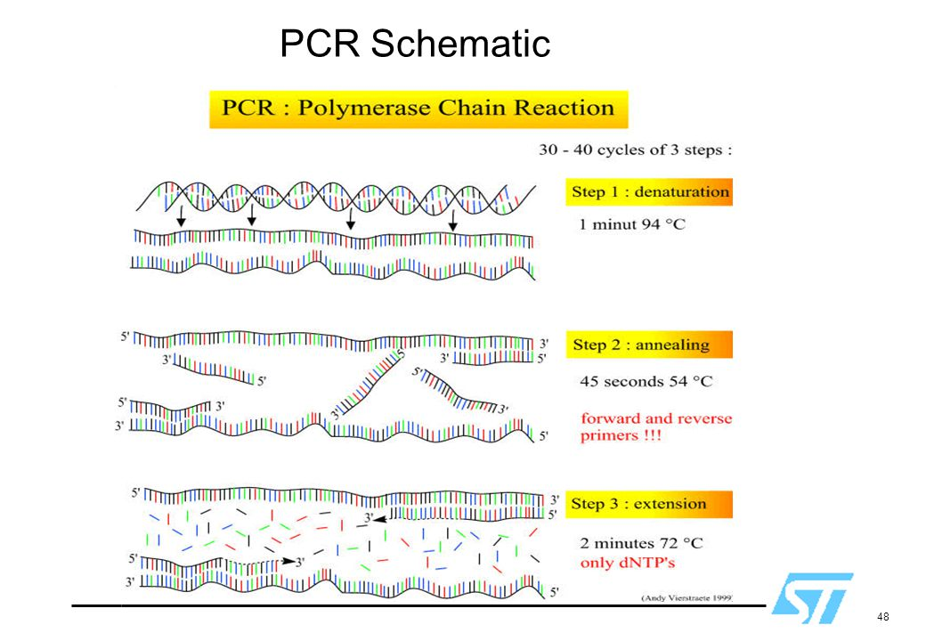 PCR Schematic Used with permission.