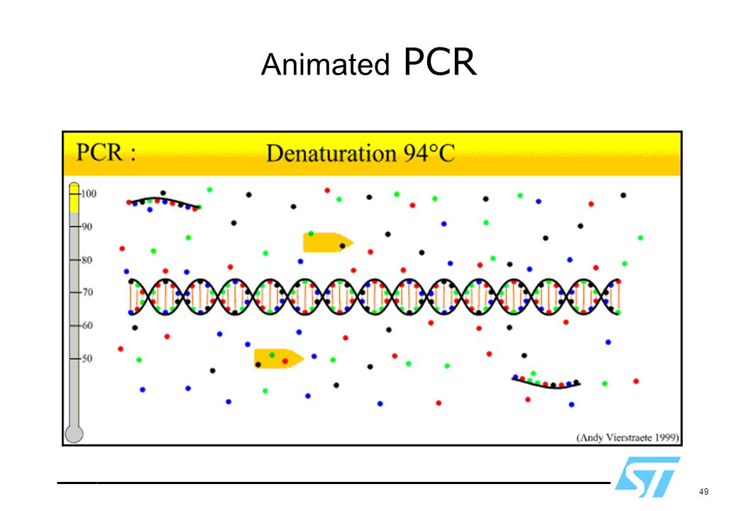 Animated PCR Used with permission.