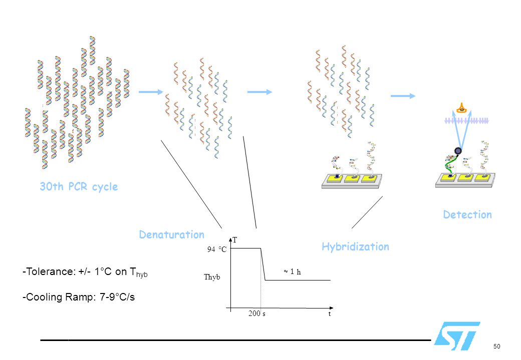 Tolerance: +/- 1°C on Thyb Cooling Ramp: 7-9°C/s Hybridization