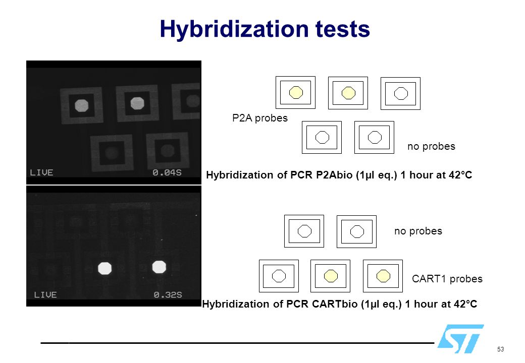 Hybridization tests P2A probes no probes