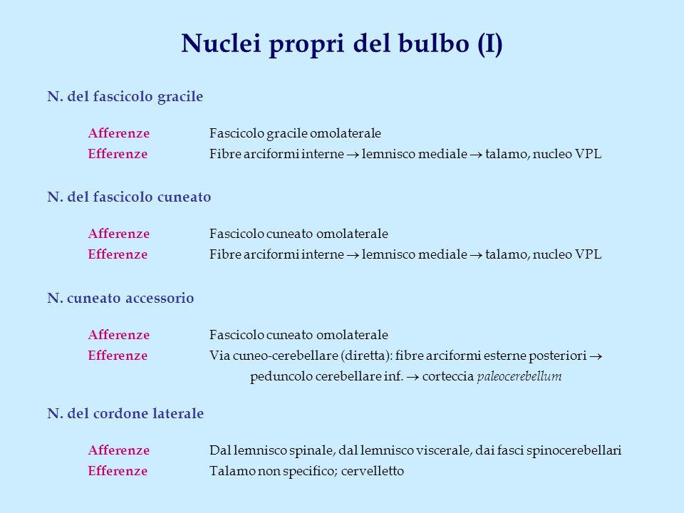 Nuclei propri del bulbo (I)