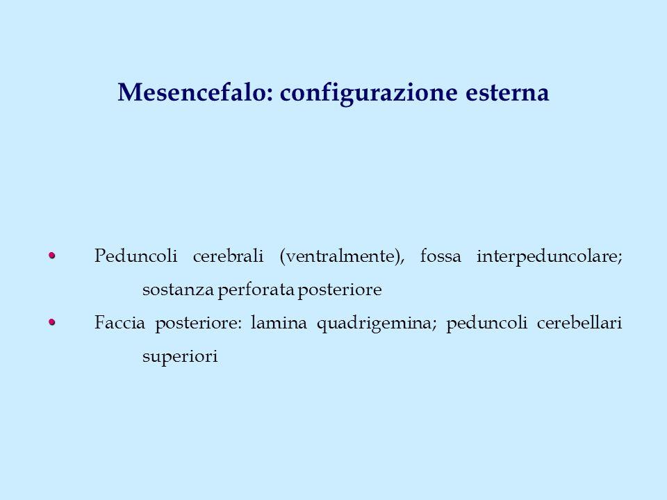 Mesencefalo: configurazione esterna