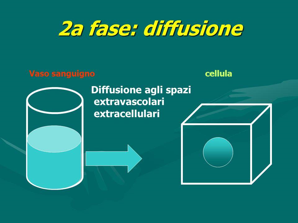 2a fase: diffusione Diffusione agli spazi extravascolari