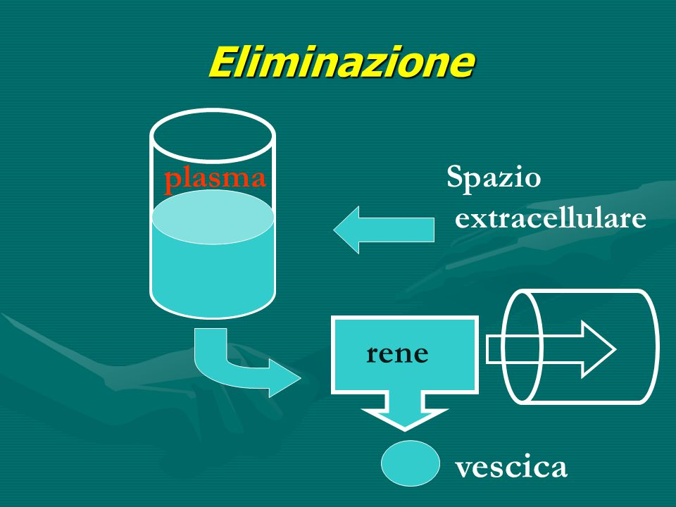 Eliminazione plasma Spazio extracellulare rene vescica