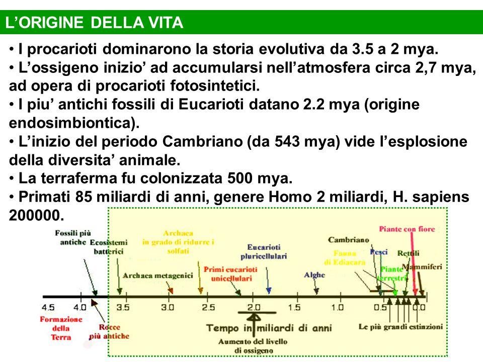 L'ORIGINE DELLA VITA I procarioti dominarono la storia evolutiva da 3.5 a 2 mya.