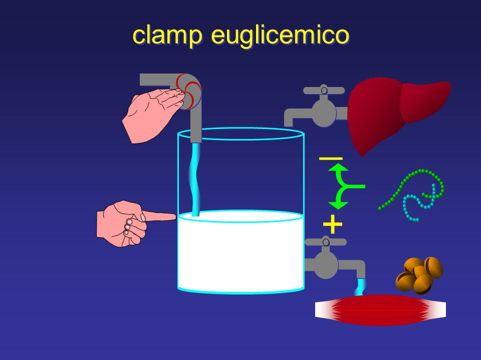 clamp euglicemico _ +