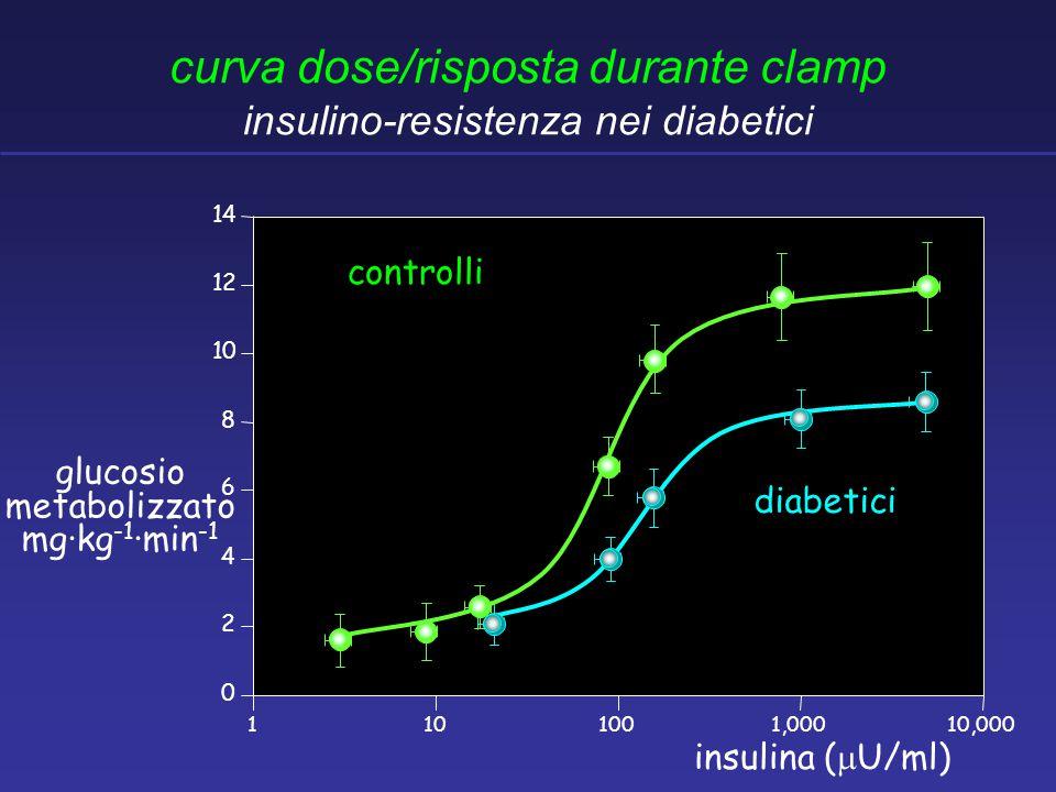 curva dose/risposta durante clamp insulino-resistenza nei diabetici