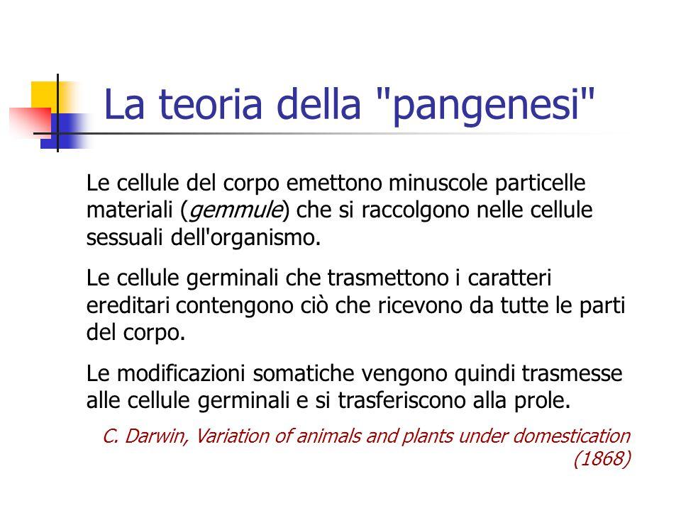 La teoria della pangenesi