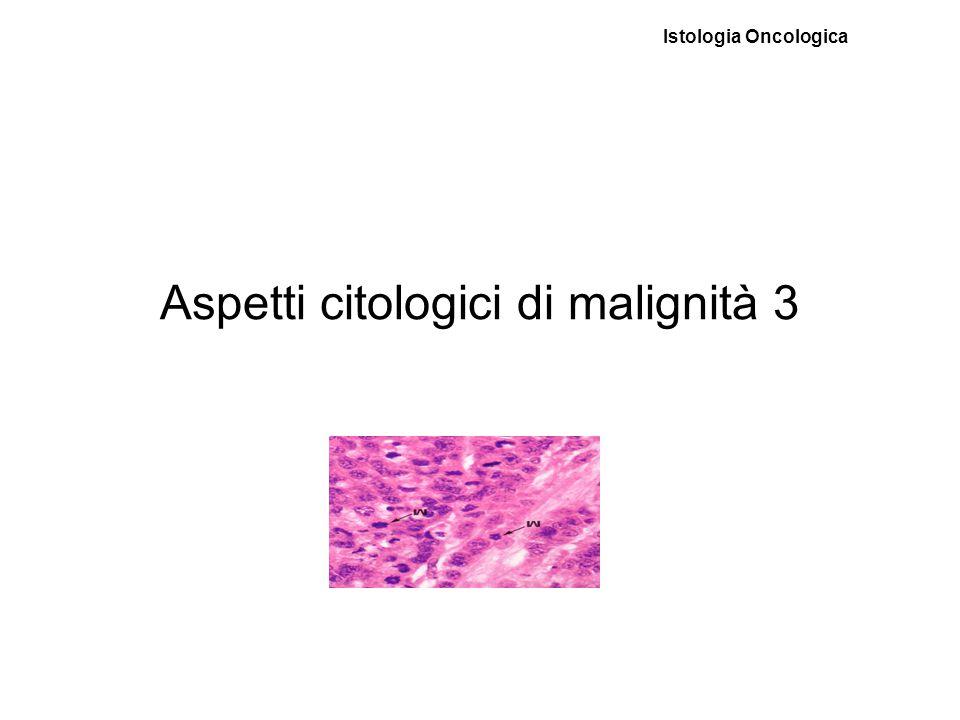 Aspetti citologici di malignità 3