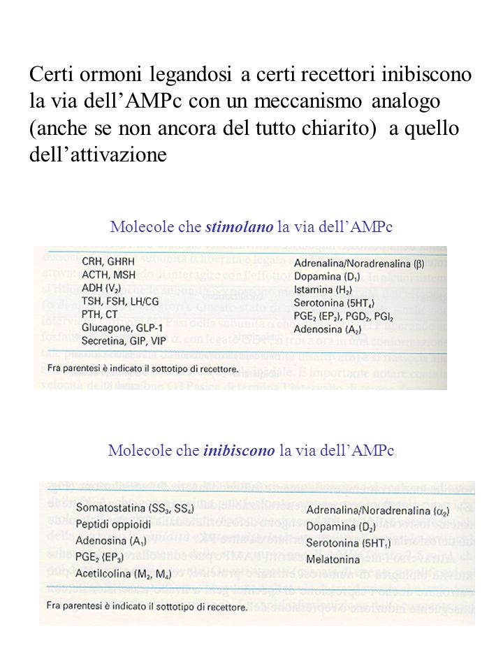 Certi ormoni legandosi a certi recettori inibiscono la via dell'AMPc con un meccanismo analogo (anche se non ancora del tutto chiarito) a quello dell'attivazione
