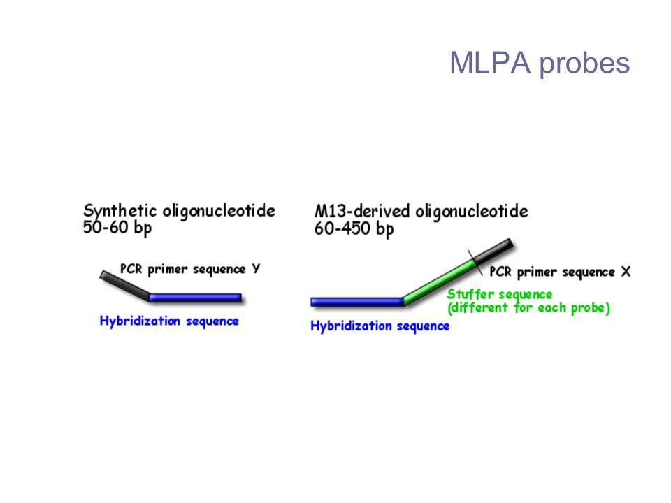 MLPA probes Each MLPA probe consists of two oligonucleotides, one synthetic and one M13-derived single-stranded DNA fragment.