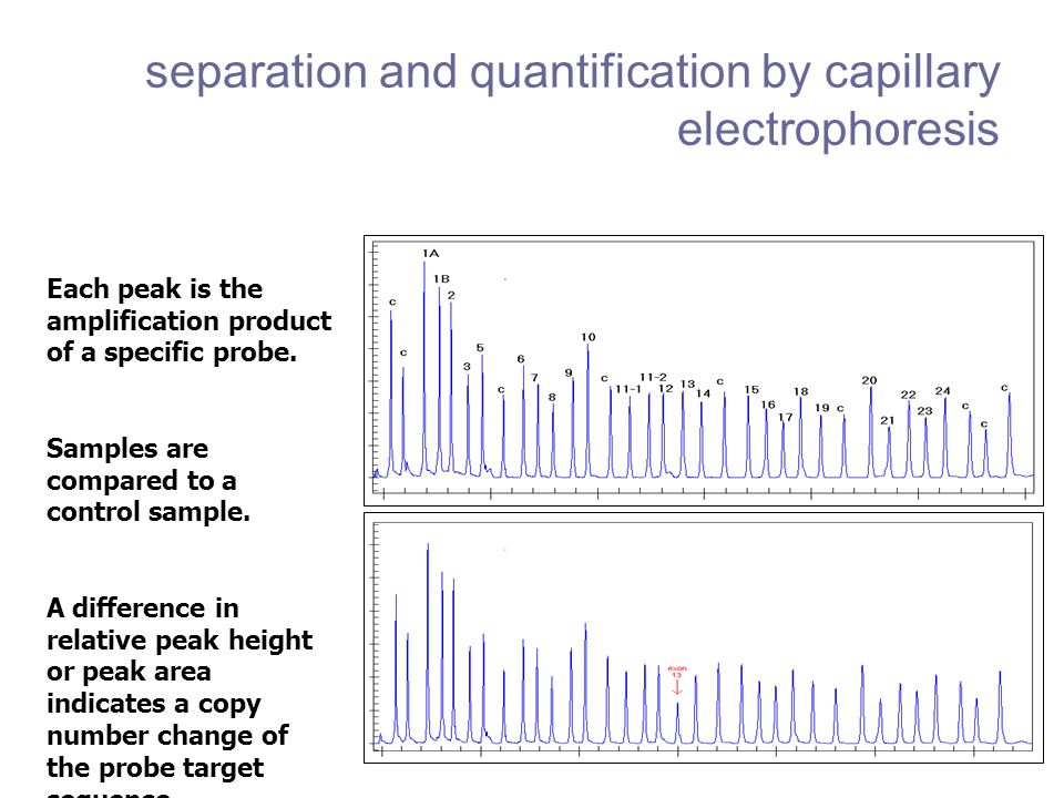 separation and quantification by capillary electrophoresis
