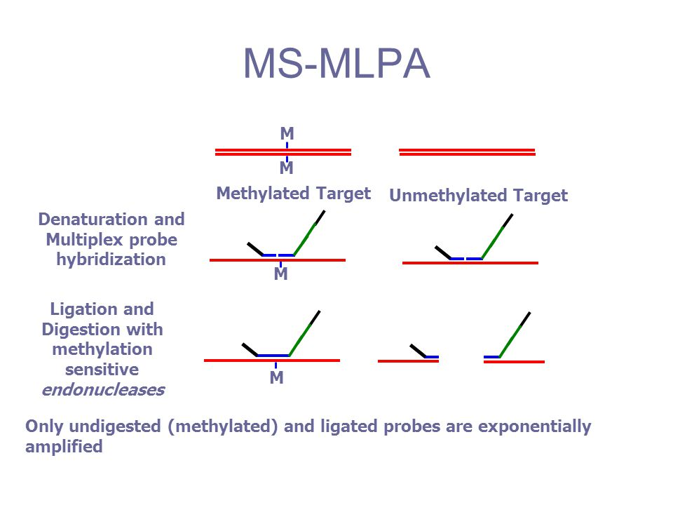 MS-MLPA M Methylated Target Unmethylated Target