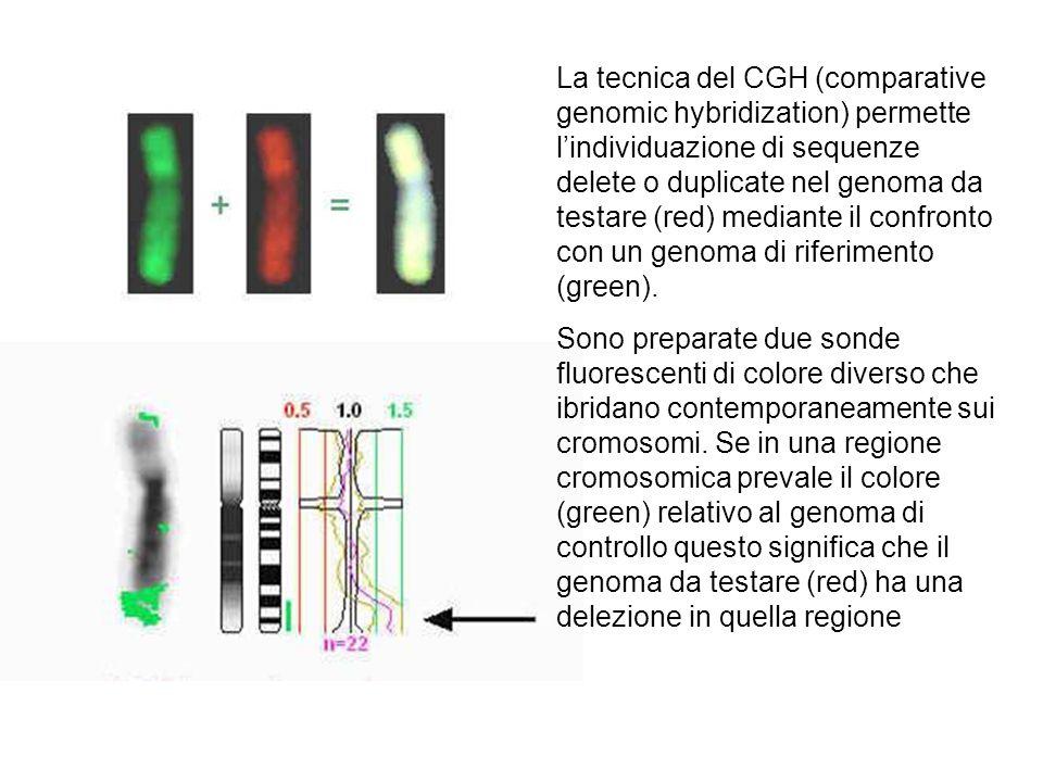 La tecnica del CGH (comparative genomic hybridization) permette l'individuazione di sequenze delete o duplicate nel genoma da testare (red) mediante il confronto con un genoma di riferimento (green).