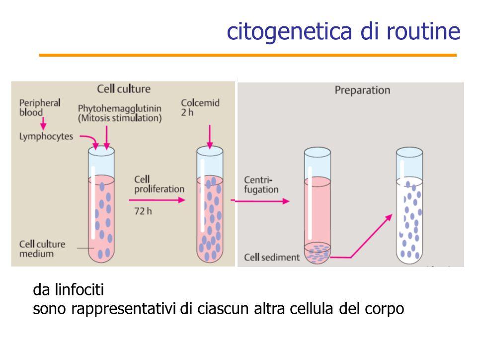 citogenetica di routine