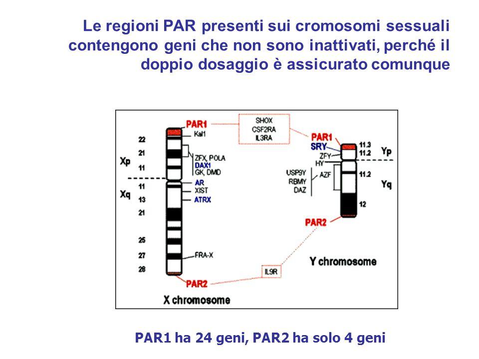 PAR1 ha 24 geni, PAR2 ha solo 4 geni