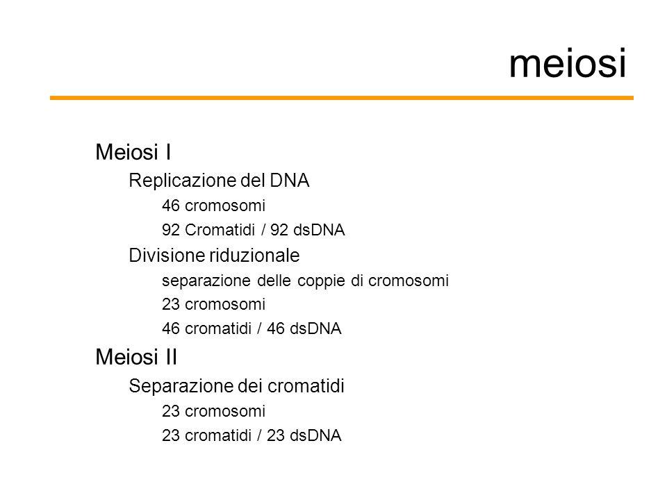 meiosi Meiosi I Meiosi II Replicazione del DNA Divisione riduzionale