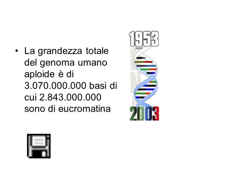 La grandezza totale del genoma umano aploide è di 3. 070. 000