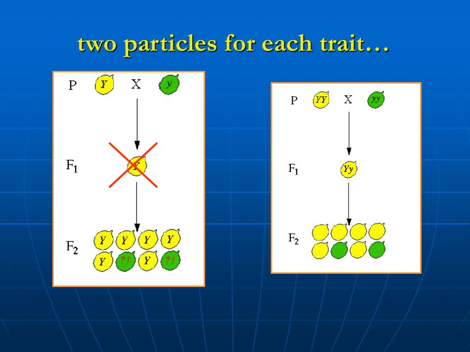 two particles for each trait…
