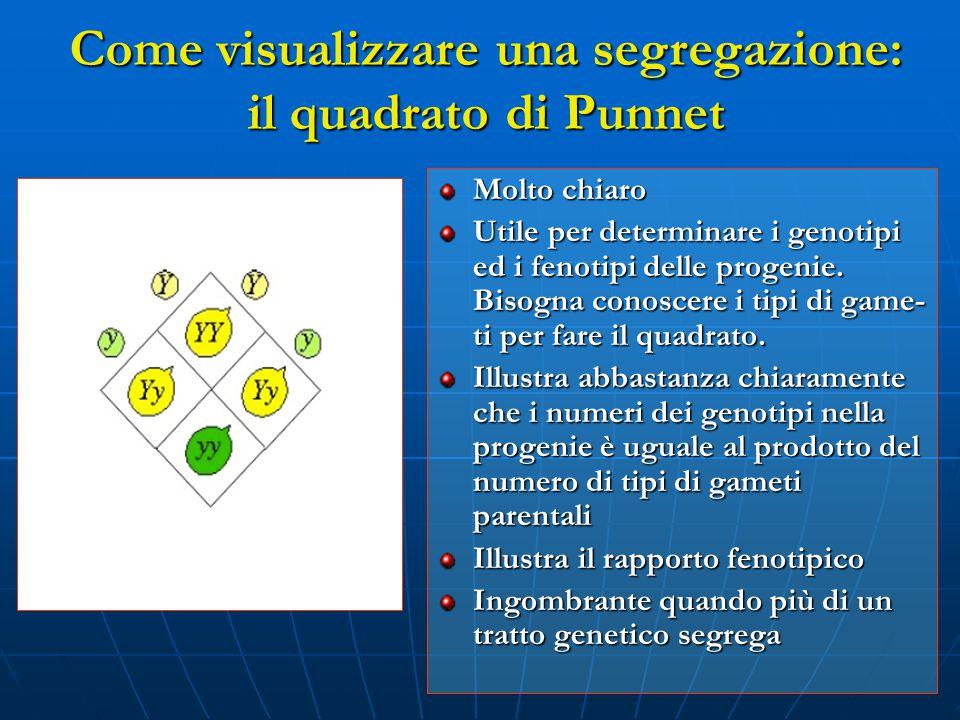 Come visualizzare una segregazione: il quadrato di Punnet