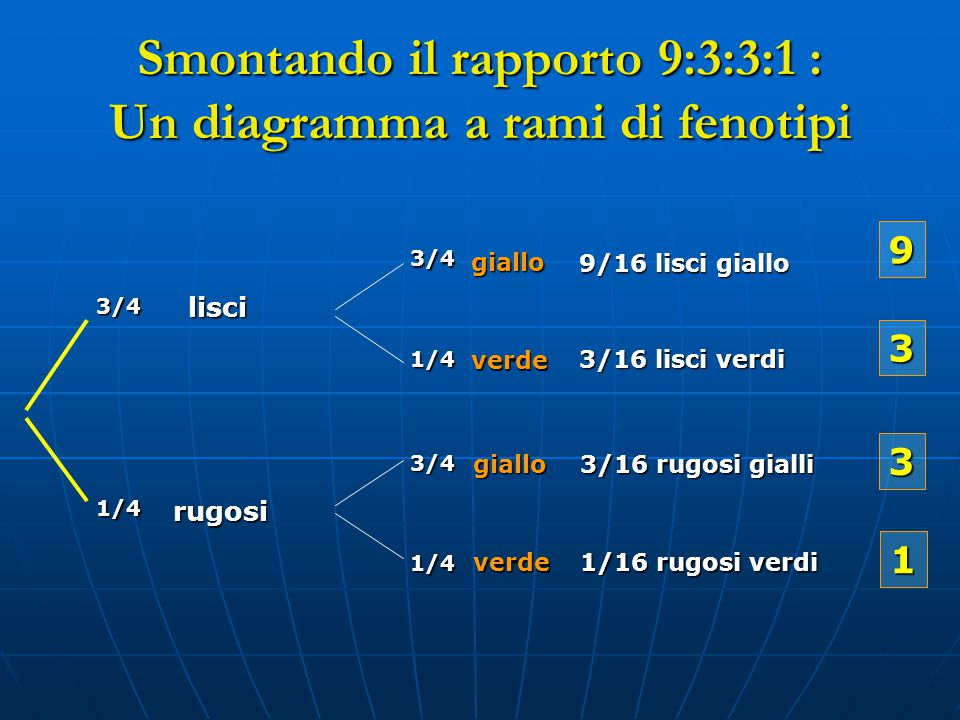 Smontando il rapporto 9:3:3:1 : Un diagramma a rami di fenotipi