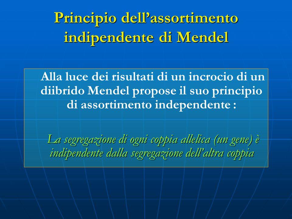 Principio dell'assortimento indipendente di Mendel