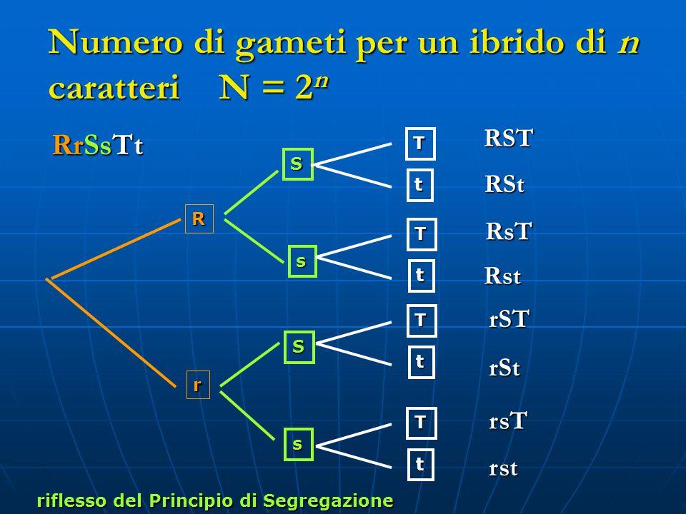 Numero di gameti per un ibrido di n caratteri N = 2n