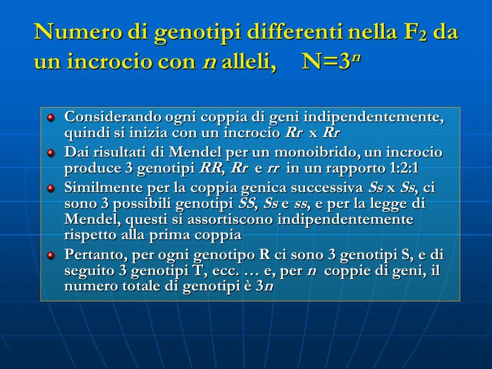 Numero di genotipi differenti nella F2 da un incrocio con n alleli, N=3n