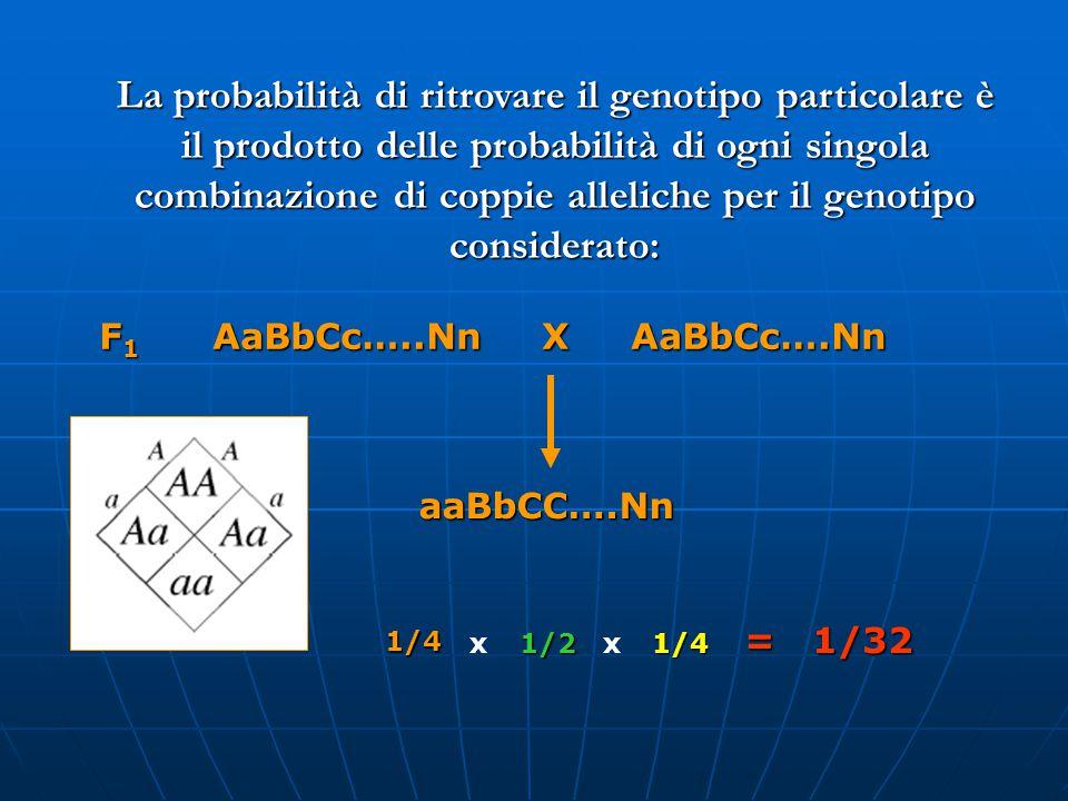 La probabilità di ritrovare il genotipo particolare è il prodotto delle probabilità di ogni singola combinazione di coppie alleliche per il genotipo considerato: