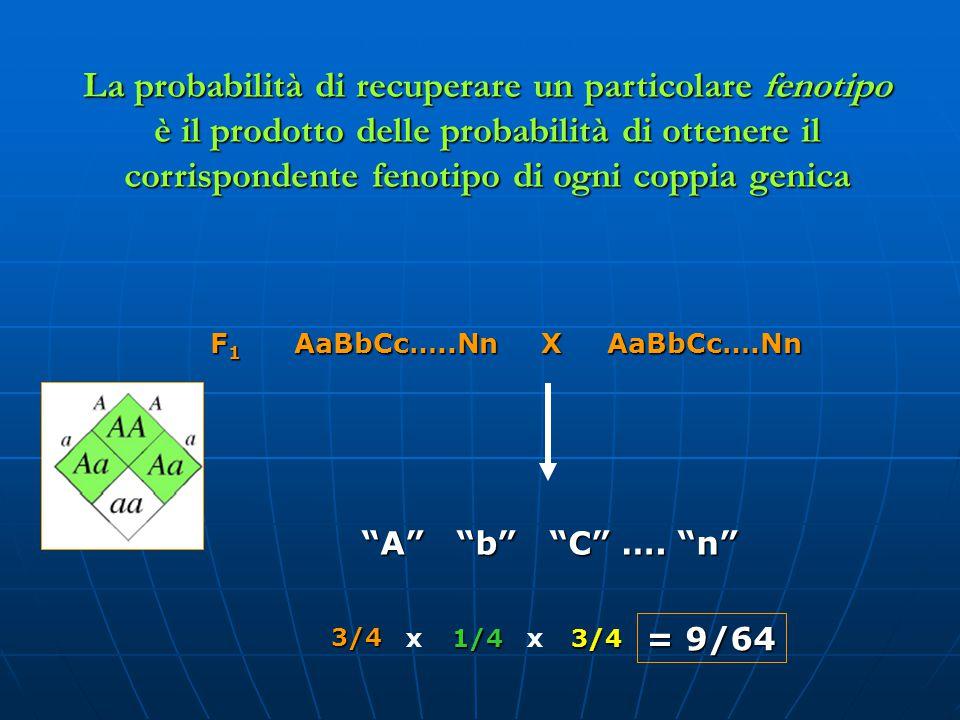 La probabilità di recuperare un particolare fenotipo è il prodotto delle probabilità di ottenere il corrispondente fenotipo di ogni coppia genica