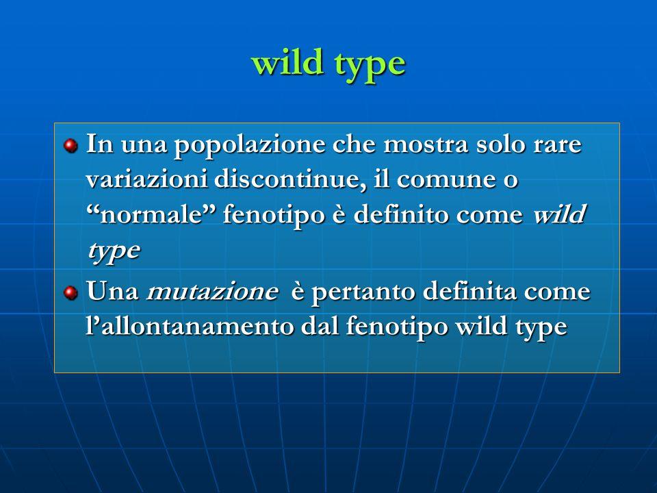 wild type In una popolazione che mostra solo rare variazioni discontinue, il comune o normale fenotipo è definito come wild type.
