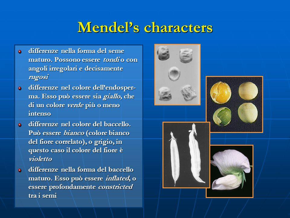 Mendel's characters differenze nella forma del seme maturo. Possono essere tondi o con angoli irregolari e decisamente rugosi.