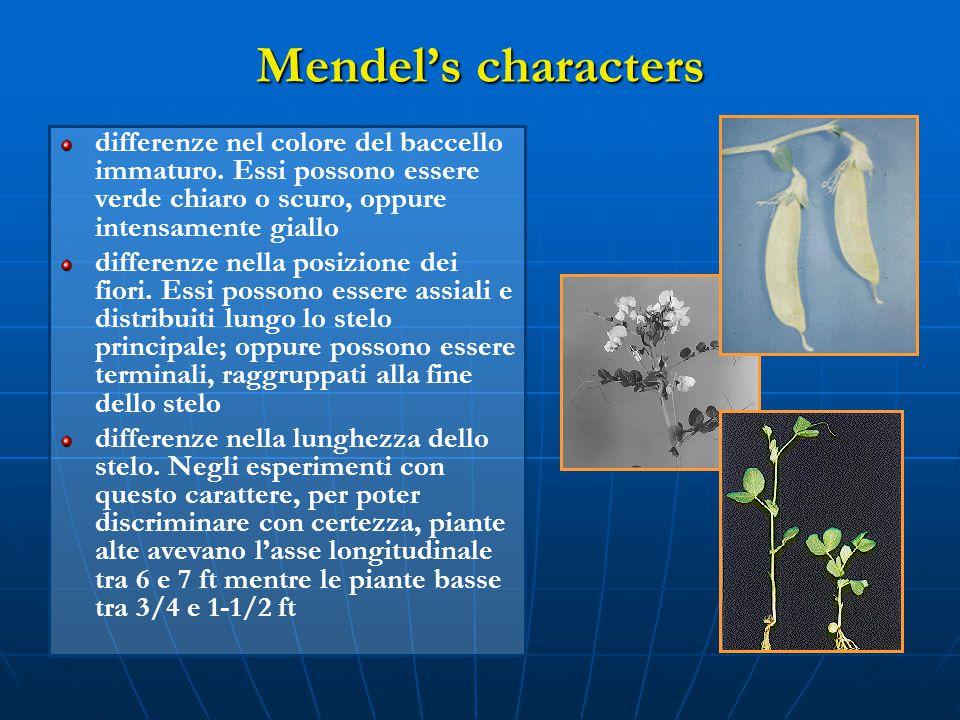 Mendel's characters differenze nel colore del baccello immaturo. Essi possono essere verde chiaro o scuro, oppure intensamente giallo.
