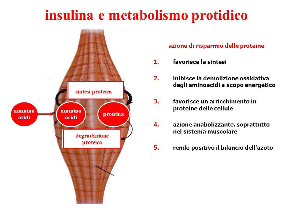 insulina e metabolismo protidico