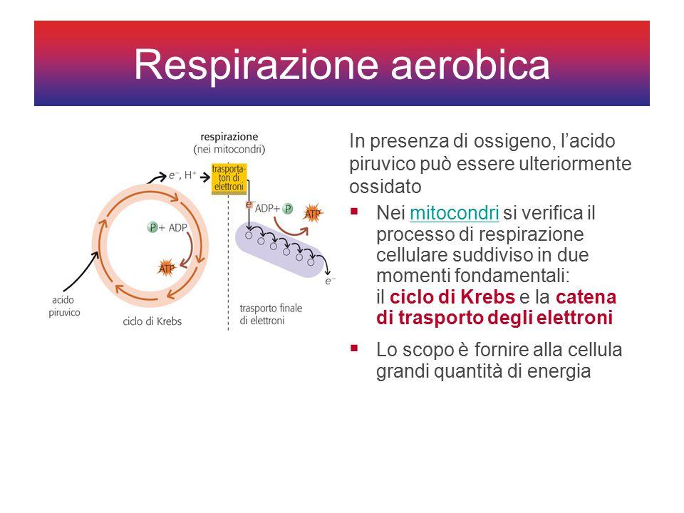 Respirazione aerobica