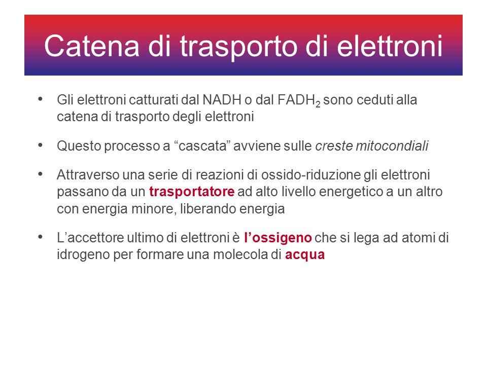 Catena di trasporto di elettroni