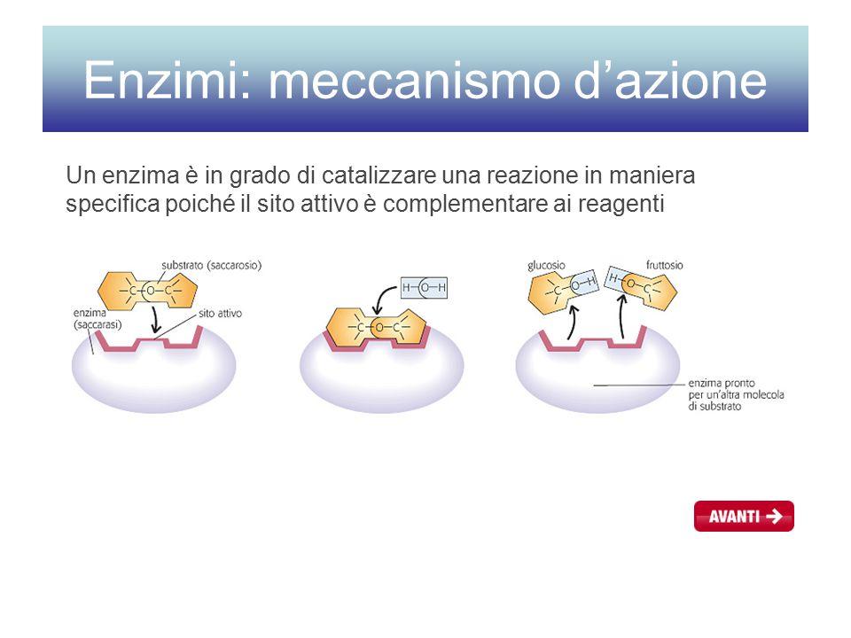 Enzimi: meccanismo d'azione