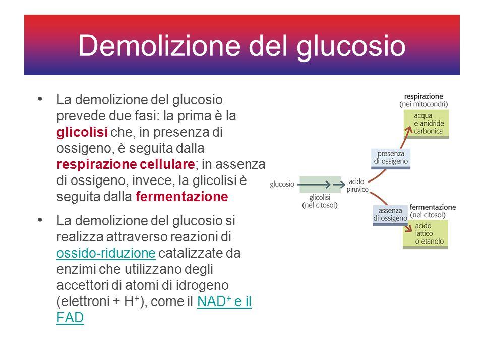 Demolizione del glucosio