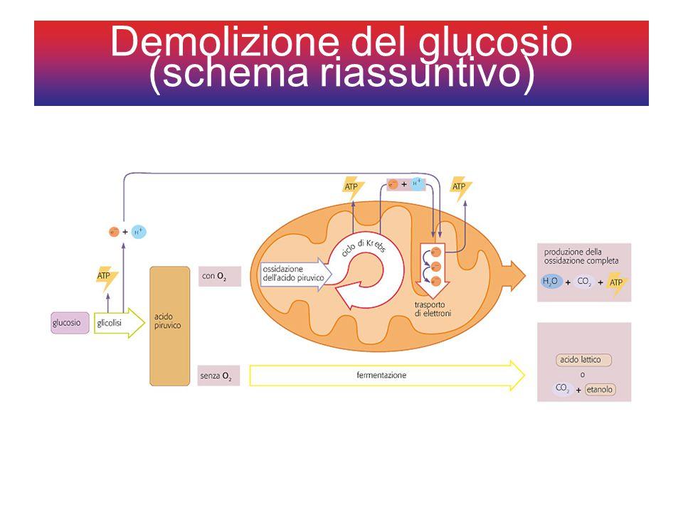 Demolizione del glucosio (schema riassuntivo)