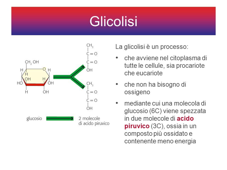 Glicolisi La glicolisi è un processo: