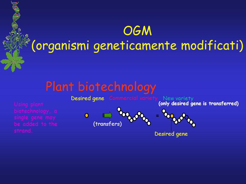 OGM (organismi geneticamente modificati)